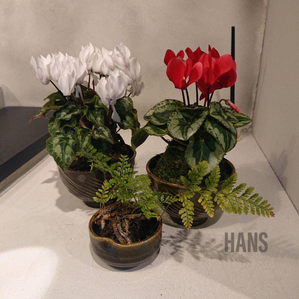 名古屋栄・伏見で人気の美容室 HANS ハンス シクラメンとトキワシノブの苔玉
