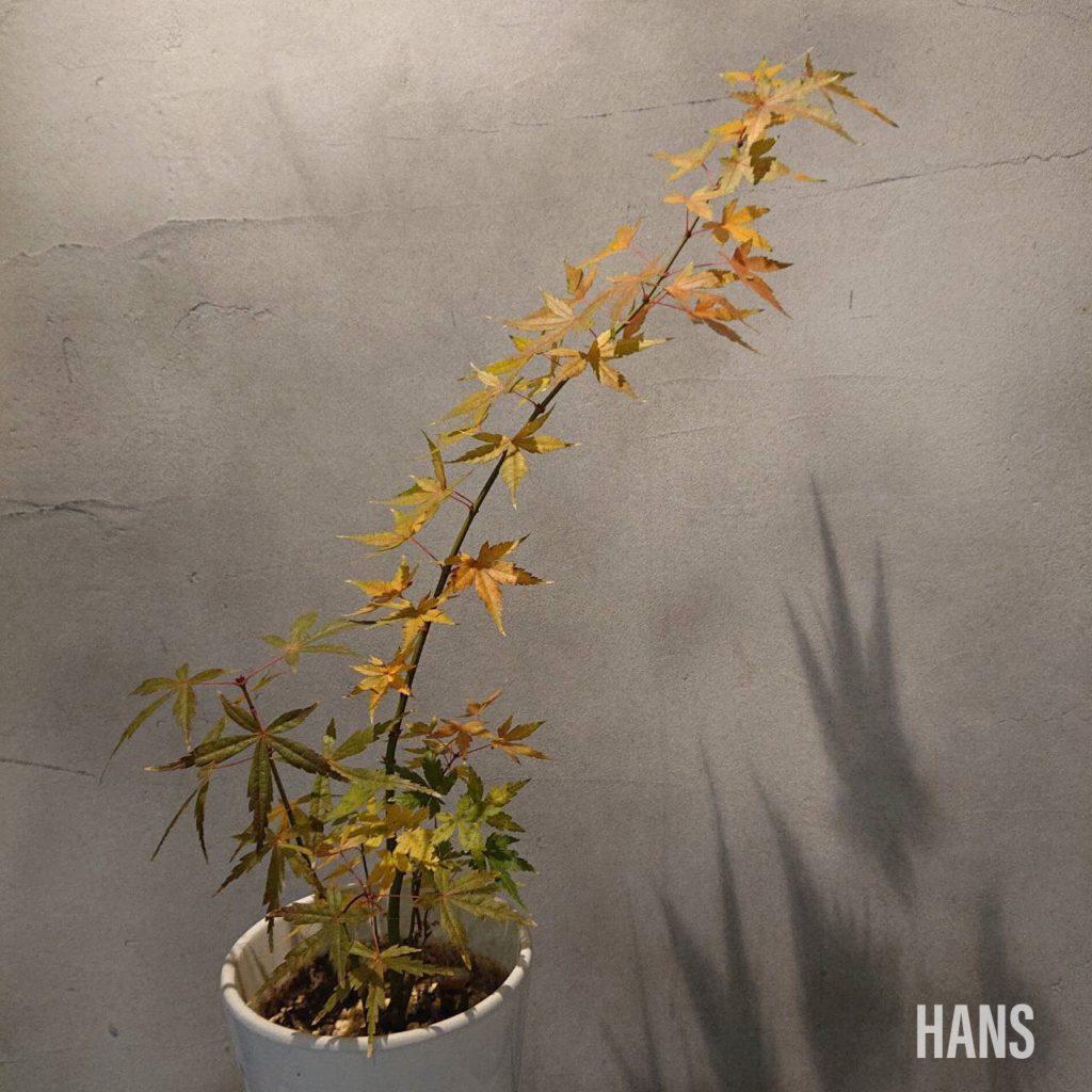 名古屋栄の美容室 HANS ハンスの植物