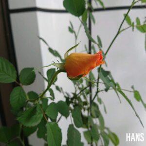 名古屋栄の美容室 HANS ハンス