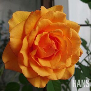 名古屋栄の美容室 HANS ハンス バラ